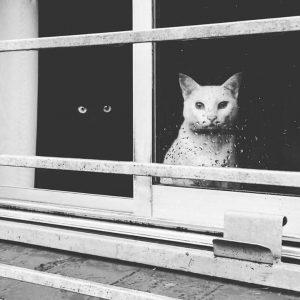 Gatto nero - Gatto Bianco